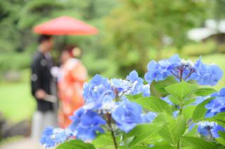 147277_千葉_紫陽花