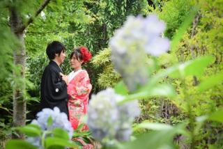 269573_千葉_紫陽花
