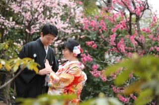 174816_東京_花(桜、梅等)