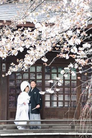 148112_東京_花(桜、梅等)