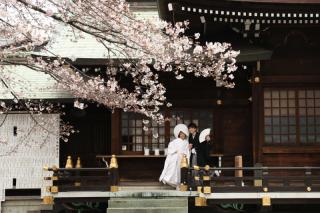 103593_東京_花(桜、梅等)