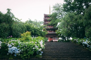 362353_千葉_松戸市内のお寺(平日予約限定)