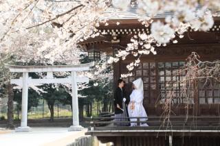 103592_東京_花(桜、梅等)