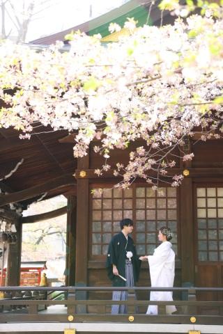 173593_東京_花(桜、梅等)