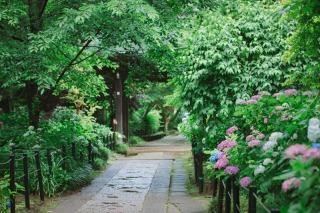 362356_千葉_松戸市内のお寺(平日予約限定)