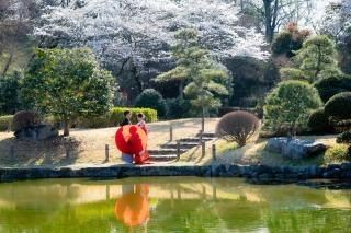 329220_千葉_あけぼの山公園(桜の季節)