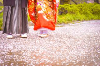 137335_神奈川_三渓園 春の花