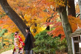 102797_神奈川_紅葉に染まる三渓園