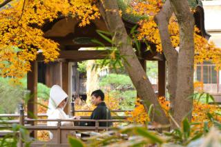 102801_神奈川_紅葉に染まる三渓園