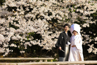 135675_神奈川_三渓園 春の花