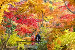 102802_神奈川_紅葉に染まる三渓園