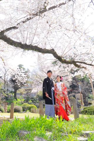 173465_東京_桜