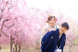 248125_新潟_ロケーション・桜