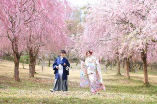 248126_新潟_ロケーション・桜