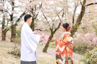 151787_新潟_ロケーション・桜