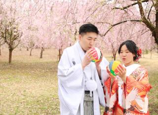151786_新潟_ロケーション・桜
