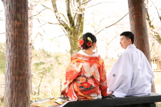 151788_新潟_ロケーション・桜
