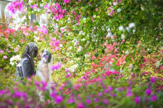 146770_沖縄_Botanical Style