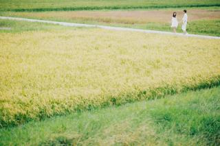 146757_沖縄_Botanical Style
