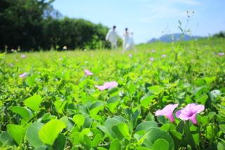 146763_沖縄_Botanical Style