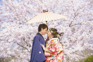 313196_京都_【2021年】桜ロケーションイメージ