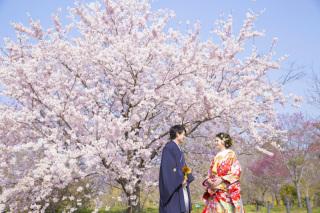 313189_京都_【2021年】桜ロケーションイメージ