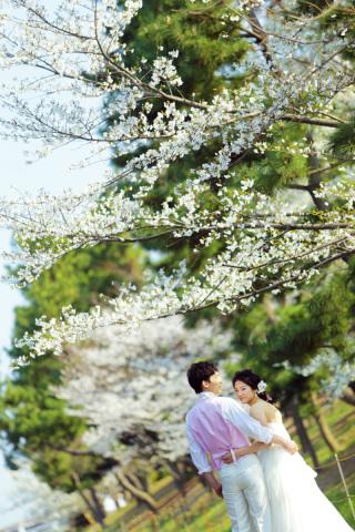 313188_東京_【2021年】桜ロケーションイメージ