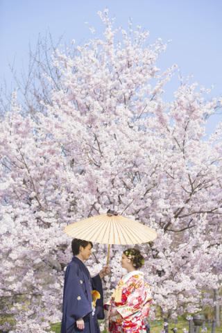 313195_京都_【2021年】桜ロケーションイメージ