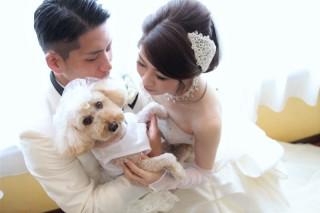 50924_奈良_Pet photo