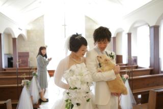 263738_奈良_Pet photo