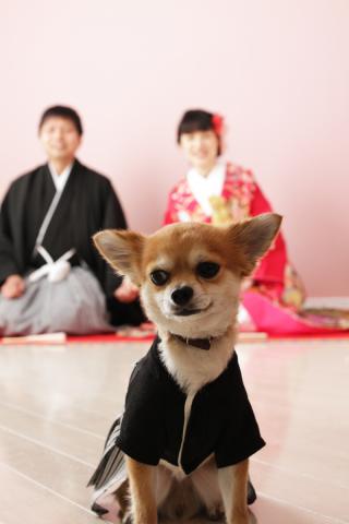 56554_奈良_Pet photo