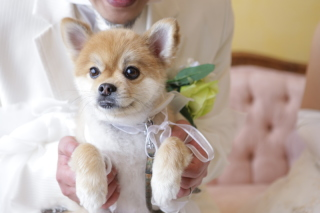 176428_奈良_Pet photo