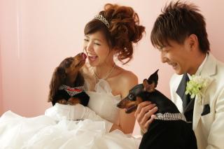 56553_奈良_Pet photo