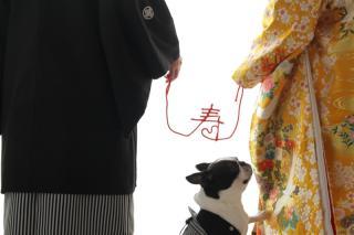 102035_奈良_Pet photo