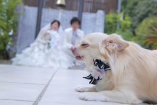 263740_奈良_Pet photo