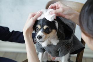 203255_奈良_Pet photo