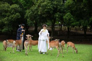 262086_奈良_奈良の自然と・ナチュラルロケ