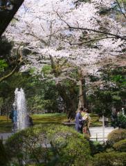 208397_石川_金沢といえばココ♪超有名観光スポット!兼六園ロケ