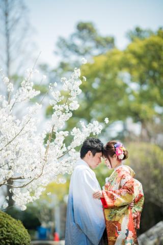 171251_愛知_岡崎公園ロケーション【桜】