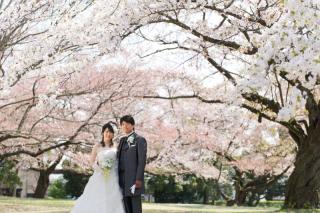 183143_埼玉_桜&紅葉