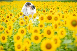 308194_徳島_花のロケーション撮影