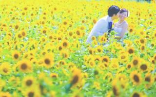 121210_徳島_花のロケーション撮影