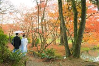 122566_京都_自然公園2