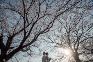 311421_埼玉_桜ロケーション