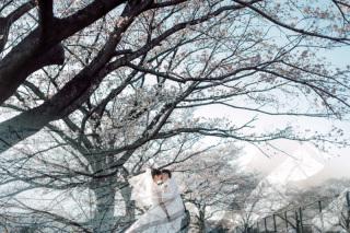 311420_埼玉_桜ロケーション