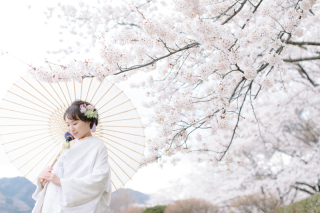 290901_新潟_桜