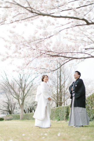 290896_新潟_桜
