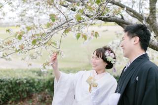 290894_新潟_桜