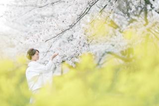 290900_新潟_桜