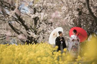 267024_新潟_ロケーションフォト【春・夏】1